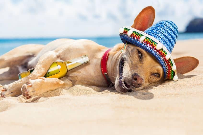 Hond moe op het strand